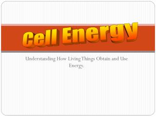 Understanding How Living Things Obtain and Use Energy.