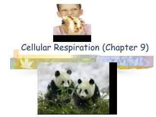 Cellular Respiration (Chapter 9)