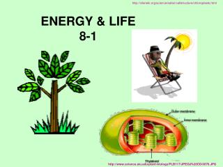 ENERGY & LIFE 8-1