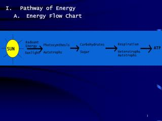 Pathway of Energy Energy Flow Chart