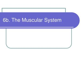 6b. The Muscular System