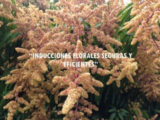 """""""INDUCCIONES FLORALES SEGURAS Y EFICIENTES"""""""