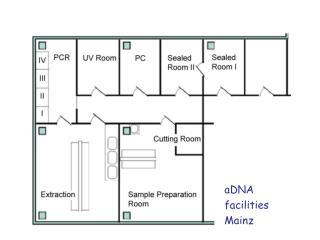 aDNA facilities Mainz