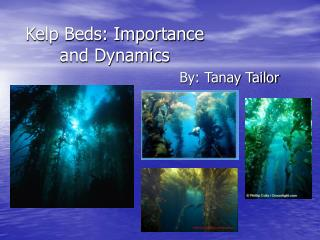 Kelp Beds: Importance and Dynamics