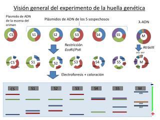Visión general del experimento de la huella genética