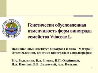 Генетически обусловленная изменчивость форм винограда семейства  Vitaceae L.
