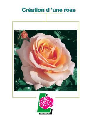 Création d'une rose