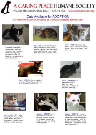 Cats Available for ADOPTION