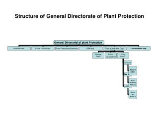 Structure of General Directorate of Plant Protection