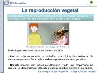 La reproducción vegetal