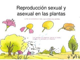 Reproducción sexual y asexual en las plantas