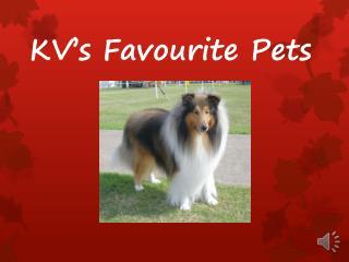 KV's Favourite Pets