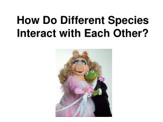 How Do Different Species Interact with Each Other?