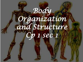Body Organization and Structure