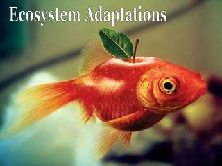 Ecosystem Adaptations