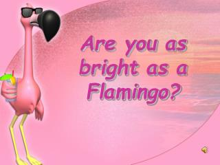 Are you as bright as a Flamingo?