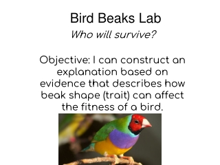 Bird Beak Lab
