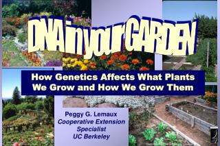 How Genetics Affects What Plants We Grow and How We Grow Them