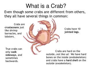What is a Crab?