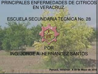PRINCIPALES ENFERMEDADES DE CITRICOS EN VERACRUZ.  ESCUELA SECUNDARIA TECNICA No. 28     POR ING. JORGE A. HERNANDEZ SAN