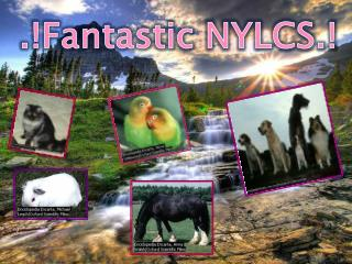 .!Fantastic NYLCS.!
