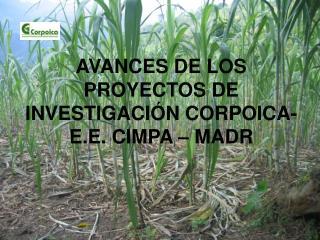 AVANCES DE LOS PROYECTOS DE INVESTIGACIÓN CORPOICA- E.E. CIMPA – MADR