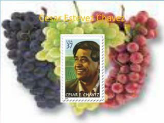 Cesar Estevez Chavez