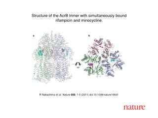 R Nakashima  et al .  Nature 000 ,  1 - 5  (2011) doi:10.1038/nature10641