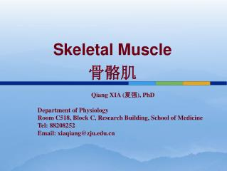 Skeletal Muscle 骨骼肌