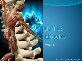 U nit 1: Muscles