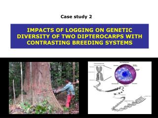 IMPACTS OF LOGGING ON GENETIC DIVERSITY OF TWO DIPTEROCARPS WITH CONTRASTING BREEDING SYSTEMS