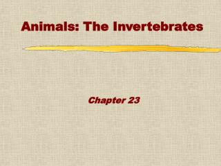 Animals: The Invertebrates
