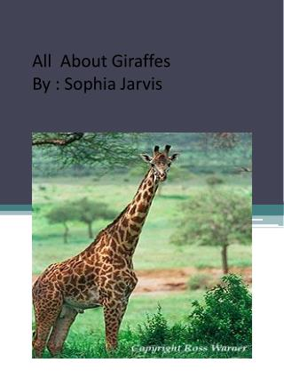 All  About Giraffes By : Sophia Jarvis