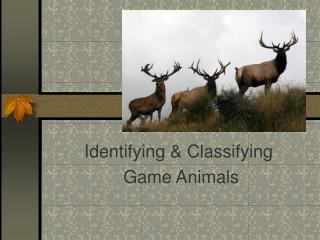 Identifying & Classifying  Game Animals