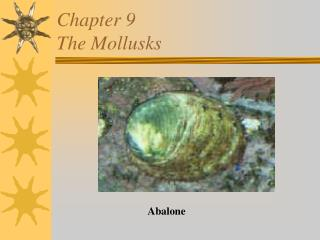 Chapter 9 The Mollusks