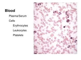 Blood Plasma/Serum Cells Erythrocytes Leukocytes Platelets