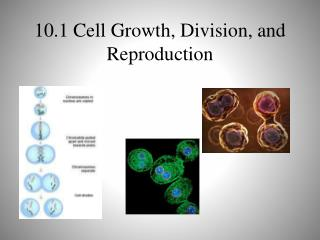10.1 Cell Growth, Division, and Reproduction