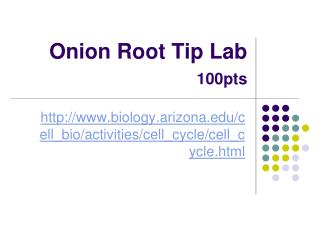 Onion Root Tip Lab 100pts