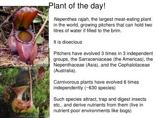 Plant of the day!