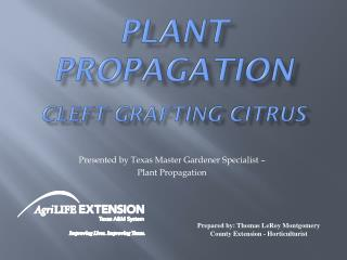 Plant Propagation Cleft Grafting Citrus