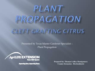 Plant Propagation Cleft Grafting Citrus