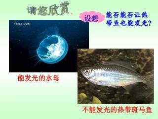 能发光的水母