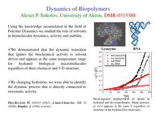 Dynamics of Biopolymers Alexei P. Sokolov, University of Akron,  DMR-0315388