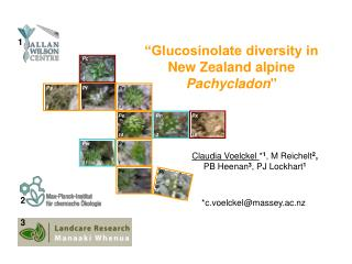 """Glucosinolate diversity in New Zealand alpine  Pachycladon"