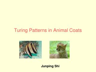 Turing Patterns in Animal Coats