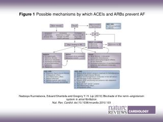Figure 1  Possible mechanisms by which ACEIs and ARBs prevent AF