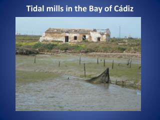 Tidal mills  in the Bay of  Cádiz