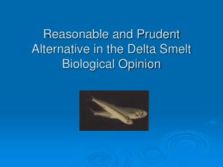 Reasonable and Prudent Alternative in the Delta Smelt Biological Opinion