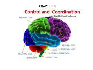 CHAPTER 7            Control and  Coordination