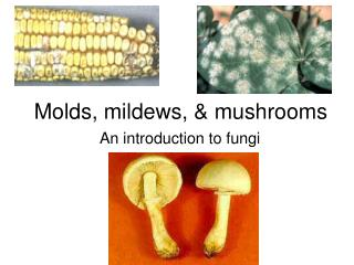 Molds, mildews, & mushrooms
